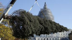 alaska ships a capitol christmas tree with all of the trimmings npr