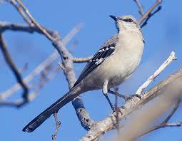 Texas birds images Birds of northeast texas jpg
