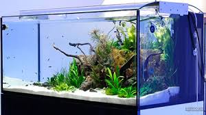 Most Beautiful Aquascapes Don U0027t Beat Your Aquascape With The Ugly Stick Scapefu