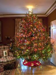seven to eight foot premium fraser fir tree clements trees