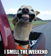 Weekend Meme - smell the weekend funny pictures quotes memes funny images