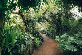 Botanic Gardens Dundee The Of Dundee Botanic Garden Haarkon Lifestyle And