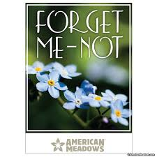 forget me not seed packets best 25 forget me not seeds ideas on forget me not