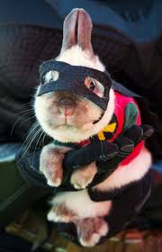 Funny Halloween Costumes Cats Ridiculous Halloween Pet Costumes Pet Costumes Robins Batman