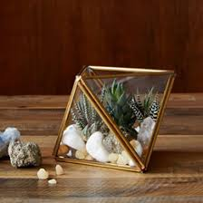 how to make a terrarium west elm