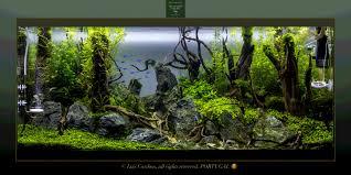 a takashi amano joint aquarium pinterest příroda aqua a kameny