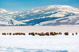 Wyoming budget travel images 10 budget friendly trips for winter fodors travel guide jpg