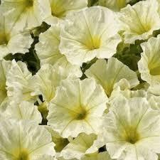 22 best flowers for the garden images on pinterest garden