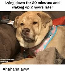 Aww Memes - lying down for 20 minutes and waking up 2 hours later ahahaha aww