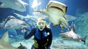 Seeking Melbourne 6 Thrill Seeking Activities To Do This Summer Eureka Skydeck