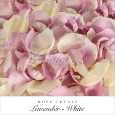 where to buy petals petals lavender white ebloomsdirect where to buy bulk