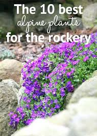Rock Garden Plants Uk Rock Garden Plants Uk Rock Garden With Rocks And Plants