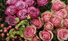 australian garden flowers the best boutique florists in sydney