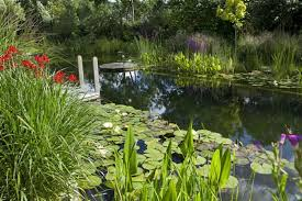 Backyard Swimming Ponds by Natural Pools Or Swimming Ponds U2022 Nifty Homestead