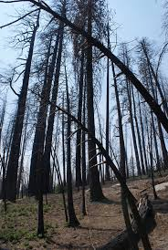 Wildfire Yosemite 2013 by Forest Fire Example Of Possible Things To Come
