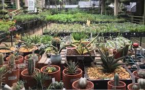 Benefits Of Urban Gardening - 7 reasons why urban gardening is cool again lifestyle gma