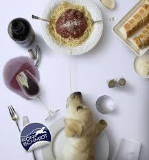 cuisine schmidt merignac 117 best leashes by schmidt images on schmidt