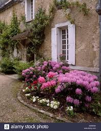 French Country House Pink Azalea In Front Of Traditional French Country House With