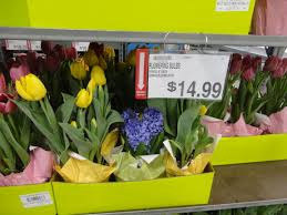 bj u0027s wholesale club easter flower selection u0026 prices ship saves