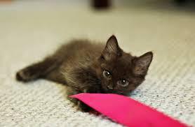 newborn kitten photo shoot goes viral