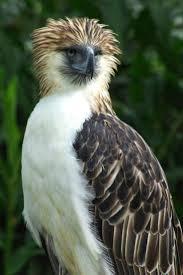 best 25 eagle bird ideas on pinterest pretty birds eagles and