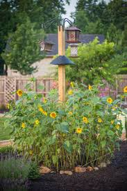 24 best peanut bird feeders images on pinterest bird feeders