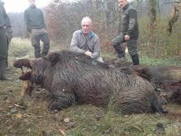 enculee au bureau quand un sanglier encule un ours