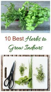 herbs grow indoors 10 best herbs for sunny windowsills