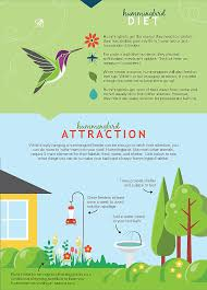 learn about the amazing hummingbird how to attract feed and