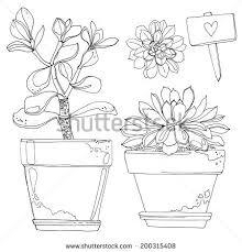 set flowers pots painted black lines stock vector 200315408