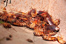 How To Get Rid Of Cockroaches In Kitchen Cabinets by Cockroach Control Toronto Pestend Pest Control