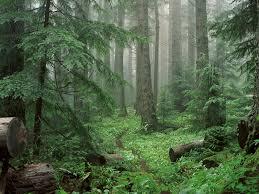 Michigan forest images Michigan vaughn roycroft 39 s blog jpg