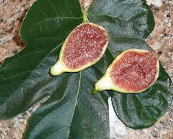 Fig Flower - desert king fig king fig charlie fig white king fig fruits