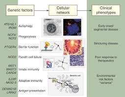advances in inflammatory bowel disease pathogenesis linking host