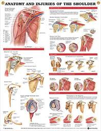 47 rotate cuff images rotator cuff exercises