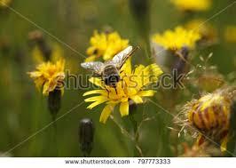 Seeking Honey Seek Honey Stock Images Royalty Free Images Vectors