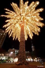 palm tree christmas tree lights christmas palm tree beautiful lighted christmas palm tree