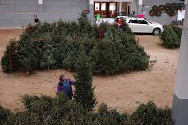 christmas tree sale forestry club s 2017 christmas tree sale set for dec 1 3 ecals
