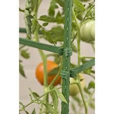 amazon com gardener u0027s blue ribbon 3 pack ultomato tomato plant