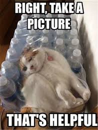 Funny Cats Meme - 36 funny cat memes that will make you laugh out loud funny cat
