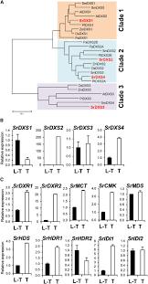 comparative transcriptomics unravel biochemical specialization of