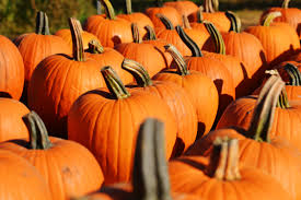 halloween images free download free images flower orange halloween season gourd carve