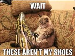 Fat Cat Meme - fat cat meme funny pictures quotes memes funny images funny