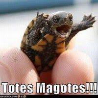 Totes Magotes Meme - 37 best totes magotes cracra adorbs images on pinterest baby