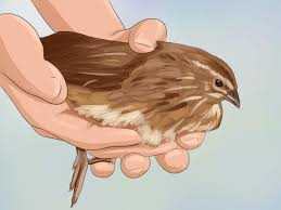 quail how to articles from wikihow