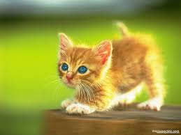 kittens wallpapers lyhyxx com