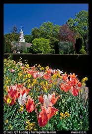 picture photo flowers and garden shop filoli estate woodside