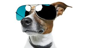 Gadgets For Pets Pet Products