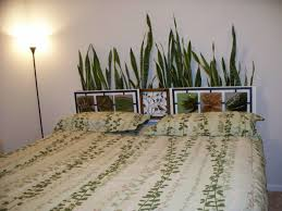 Plants For The Bedroom by Suitable Indoor Plant For Each Room Select Hum Ideas