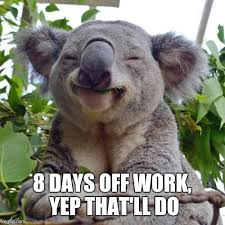 Koala Meme Generator - smug koala meme generator imgflip